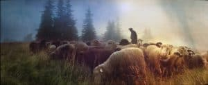 The thief comes to steal parable good shepherd